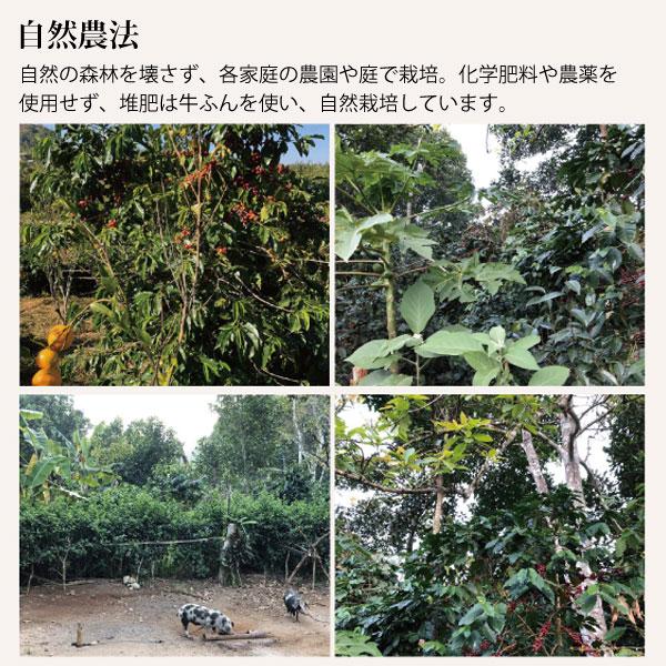 アマヤーコーヒーは自然農法で栽培されています