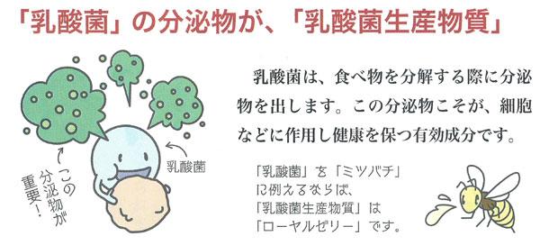 乳酸菌の分泌物が「乳酸菌生産物質」です