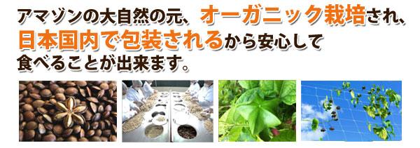 アマゾンの大自然の元、オーガニック栽培されたサチャインナッツは、日本国内で包装されるから安心して食べることが出来ます。