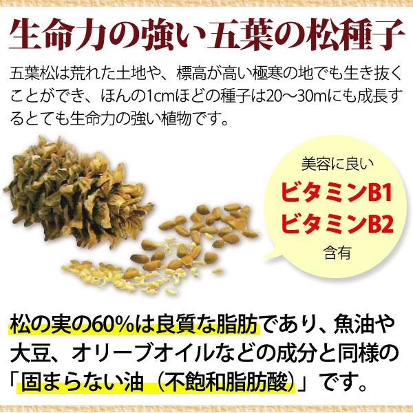 生命力の強い五葉の松種子。五葉の松は荒れた土地や、標高が高い互換の地でも生き抜くことができ、ほんの1cmほどの種子は20~30mにも成長するとても生命力の強い植物です。