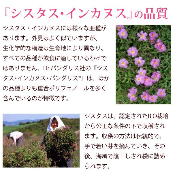 シスタス・インカヌスの品質。Dr.パンダリス社のシスタス・インカヌスは、ほかの品種よりも重合ポリフェノールを多く含んでいるのが特徴です。シスタスは、認定されたBIO栽培から公正な条件の下で収穫されます。収穫の方法は伝統的で、手で若い芽を摘んでいき、その後、海風で陰干しされ袋に詰められます。