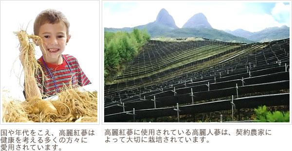 国や世代を超えて愛され、契約農家によって大切に育てられている高麗人蔘